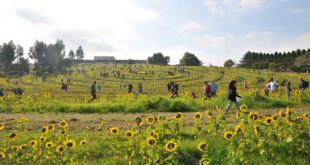 #Get-Sunflowered-(2)
