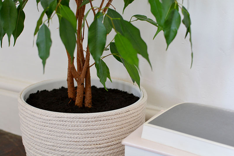 Beautiful and Stylish Rope Projects - Rope Planter
