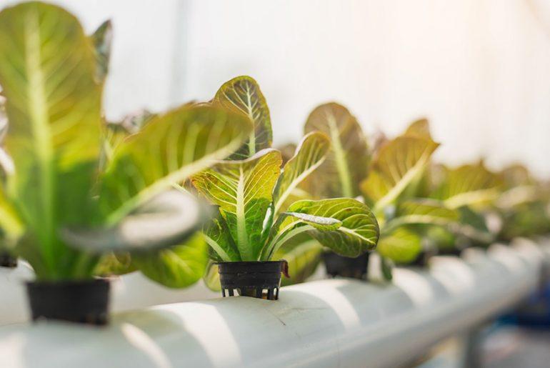 The Future of Farming Dictates the Future of Architecture - Rethinking The Future