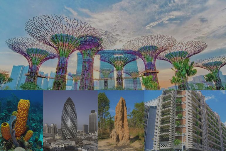 What is Biomimetic Architecture and why young Architects should know about it