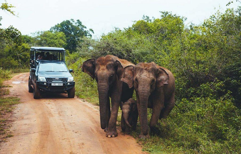 Wilderness Safari. - Sheet1