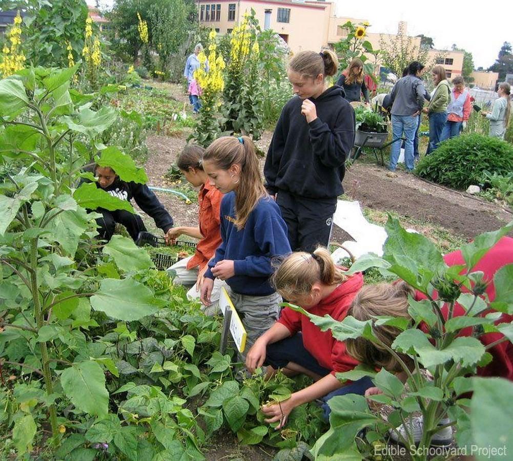 Edible Schoolyard NYC at P.S 216 - Sheet3