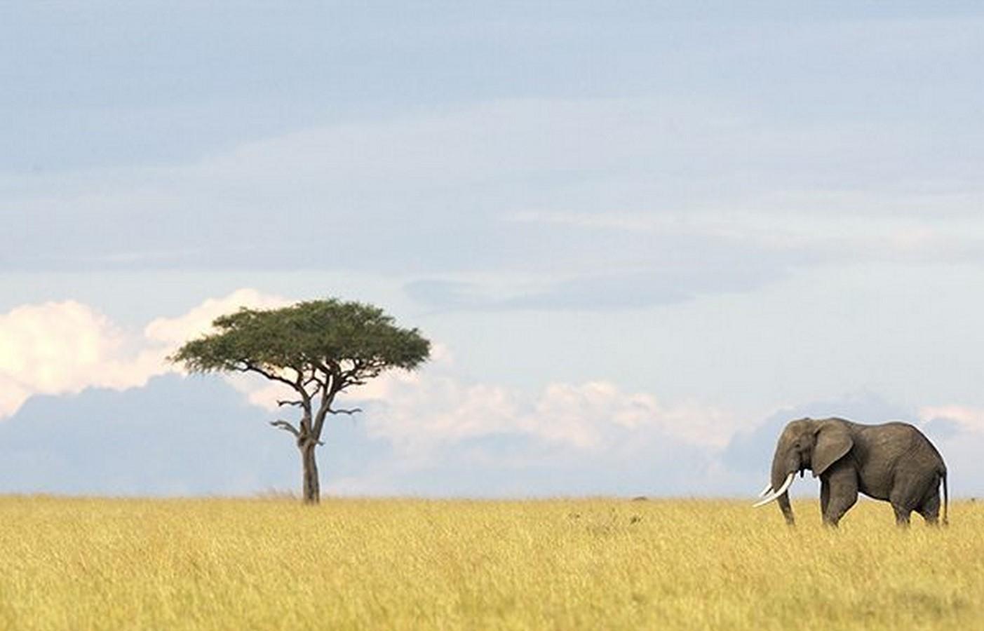 Serengeti National Park, Tanzania. - Sheet1