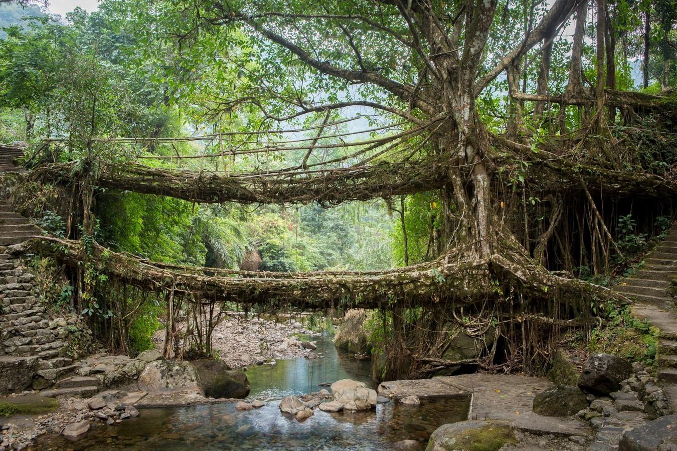 The Living Root Bridges of Meghalaya - Sheet1