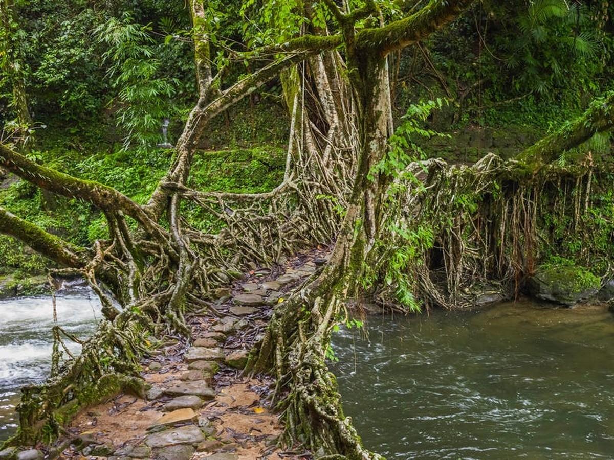 The Living Root Bridges of Meghalaya - Sheet2
