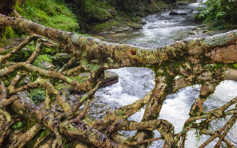 The Living Root Bridges of Meghalaya - Sheet3