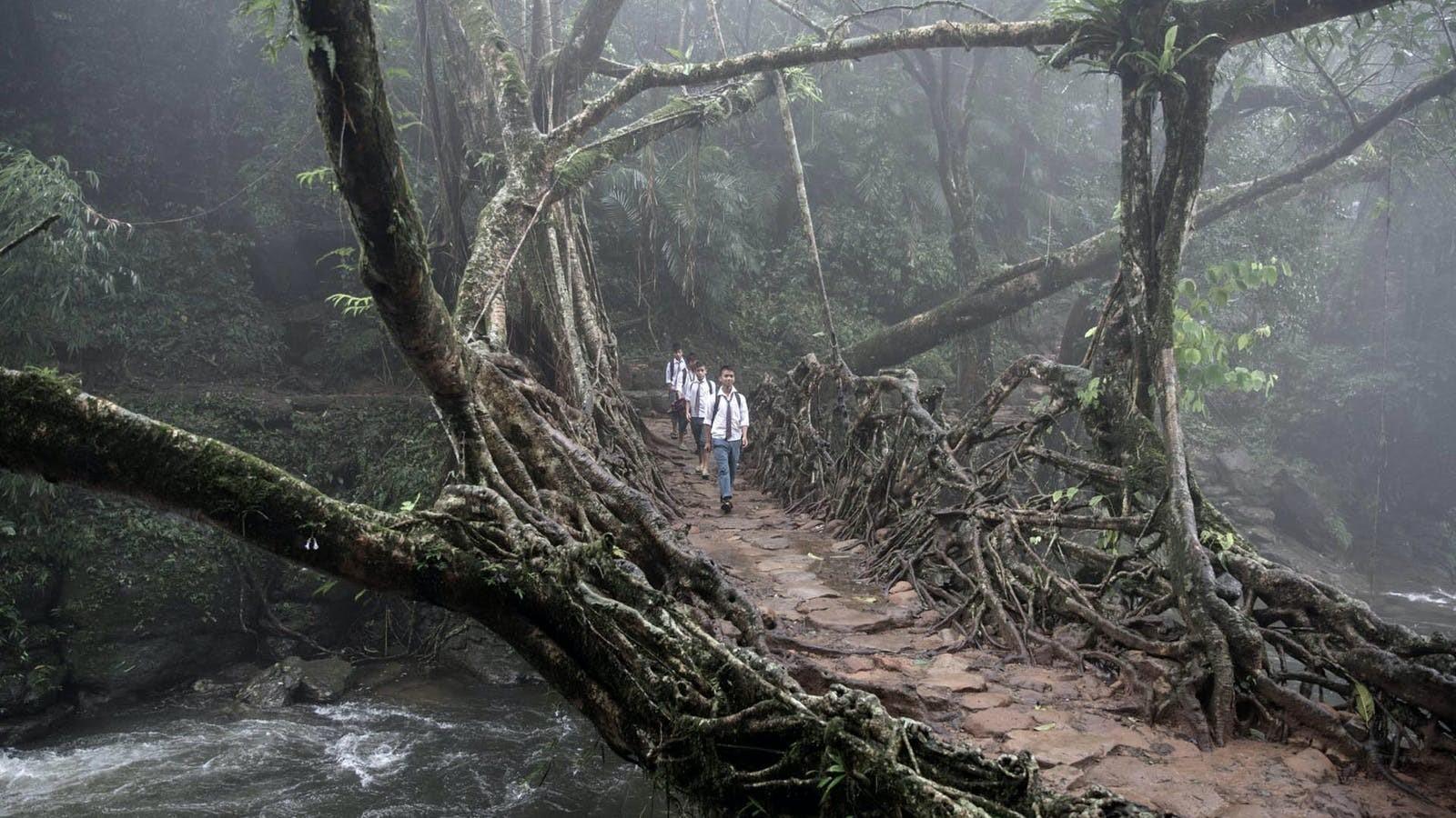 The Living Root Bridges of Meghalaya - Sheet4