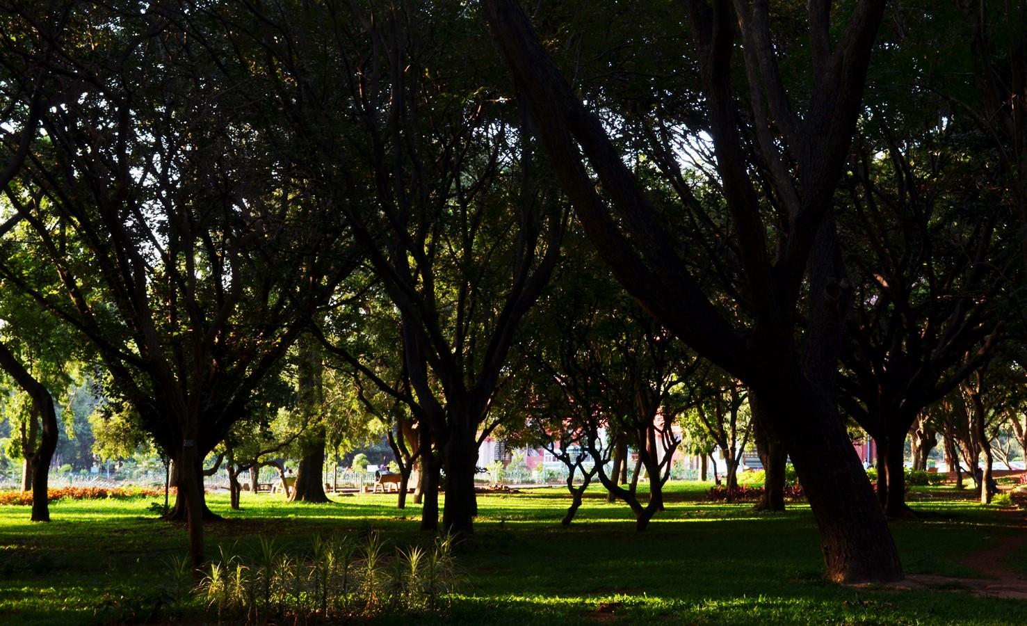 Cubbon Park- Sheet1