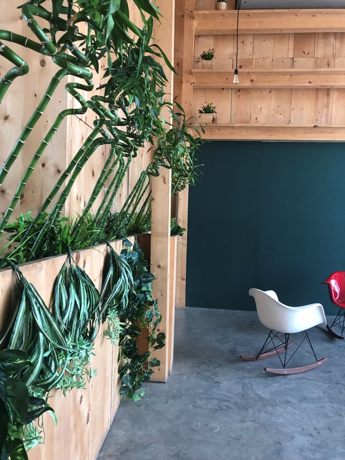 The Picture Perfect Plant in a Millennial Home - Sheet2