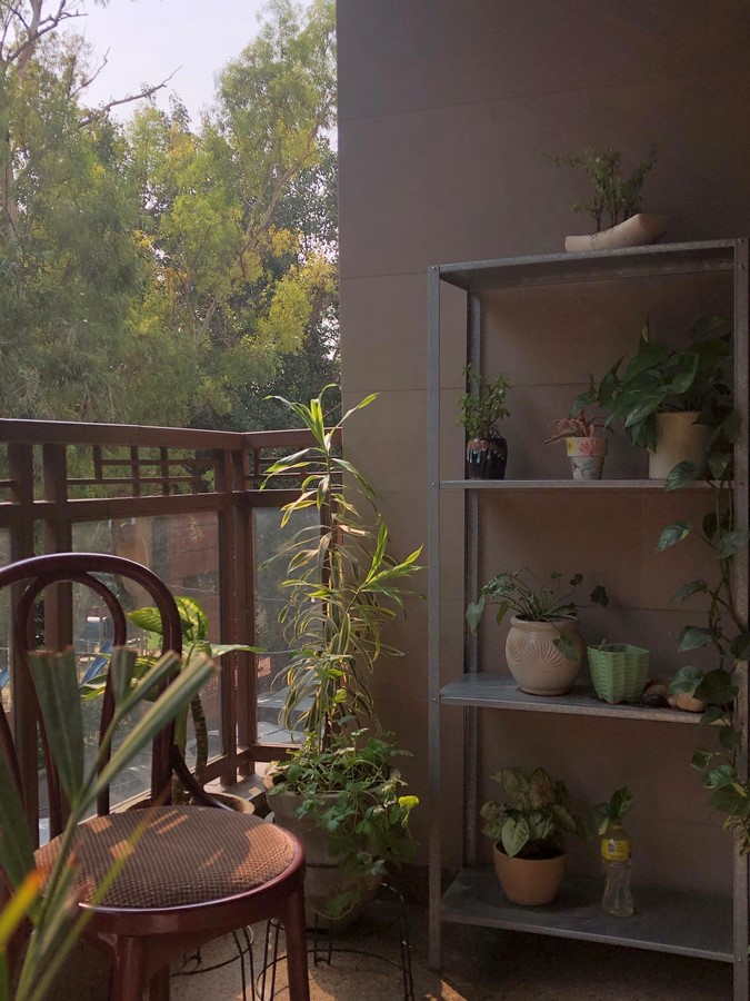 The Picture Perfect Plant in a Millennial Home - Sheet3