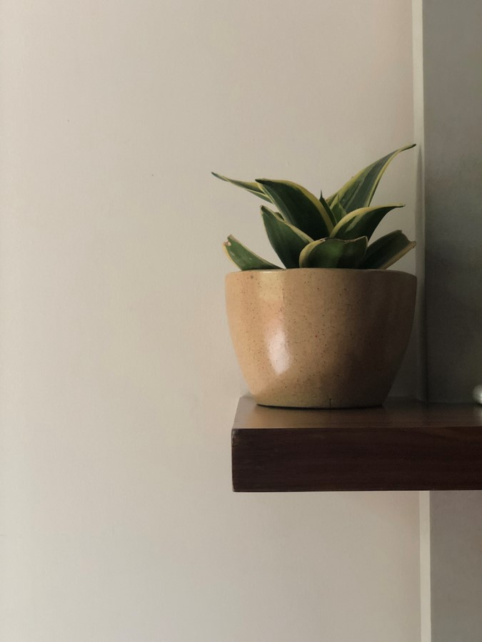 The Picture Perfect Plant in a Millennial Home - Sheet4