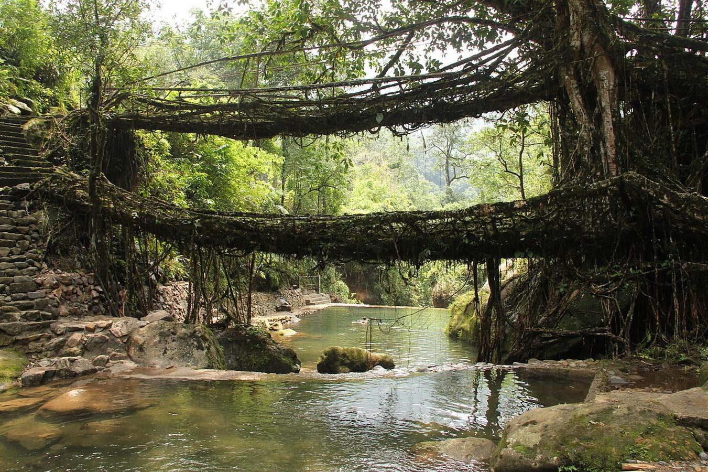 Living Root Bridge - Sheet1