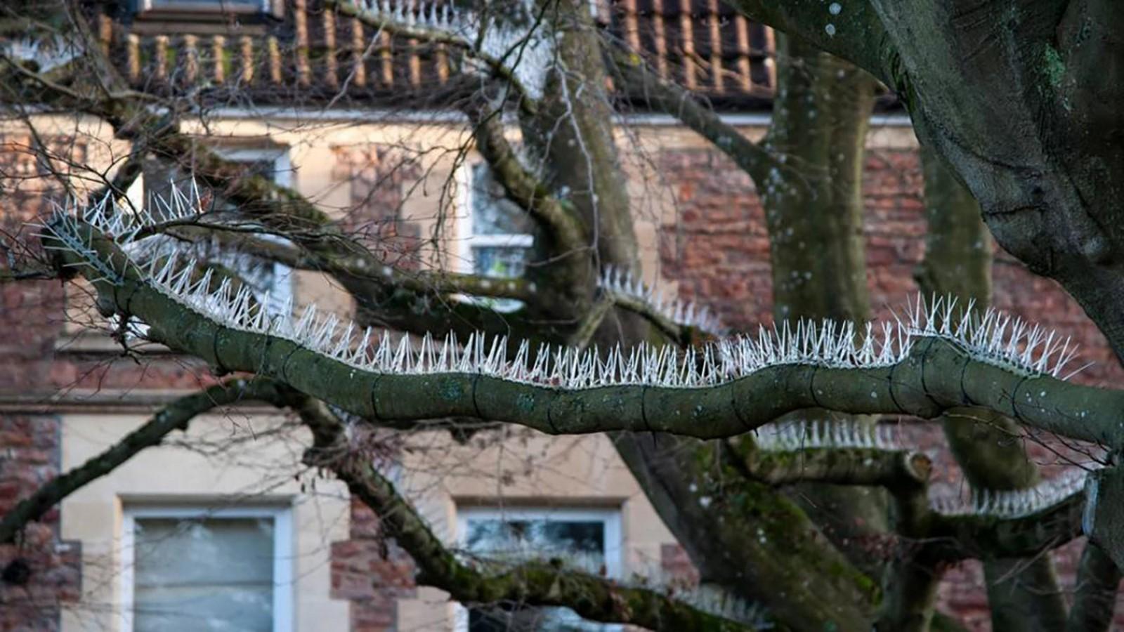 Bird spikes in Bristol, England