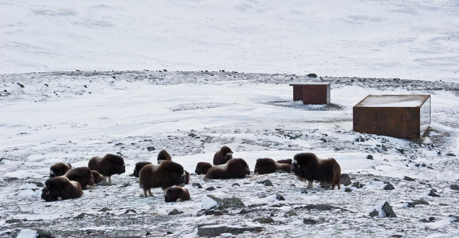 Norwegian Wild Reindeer Centre Pavilion - Sheet1