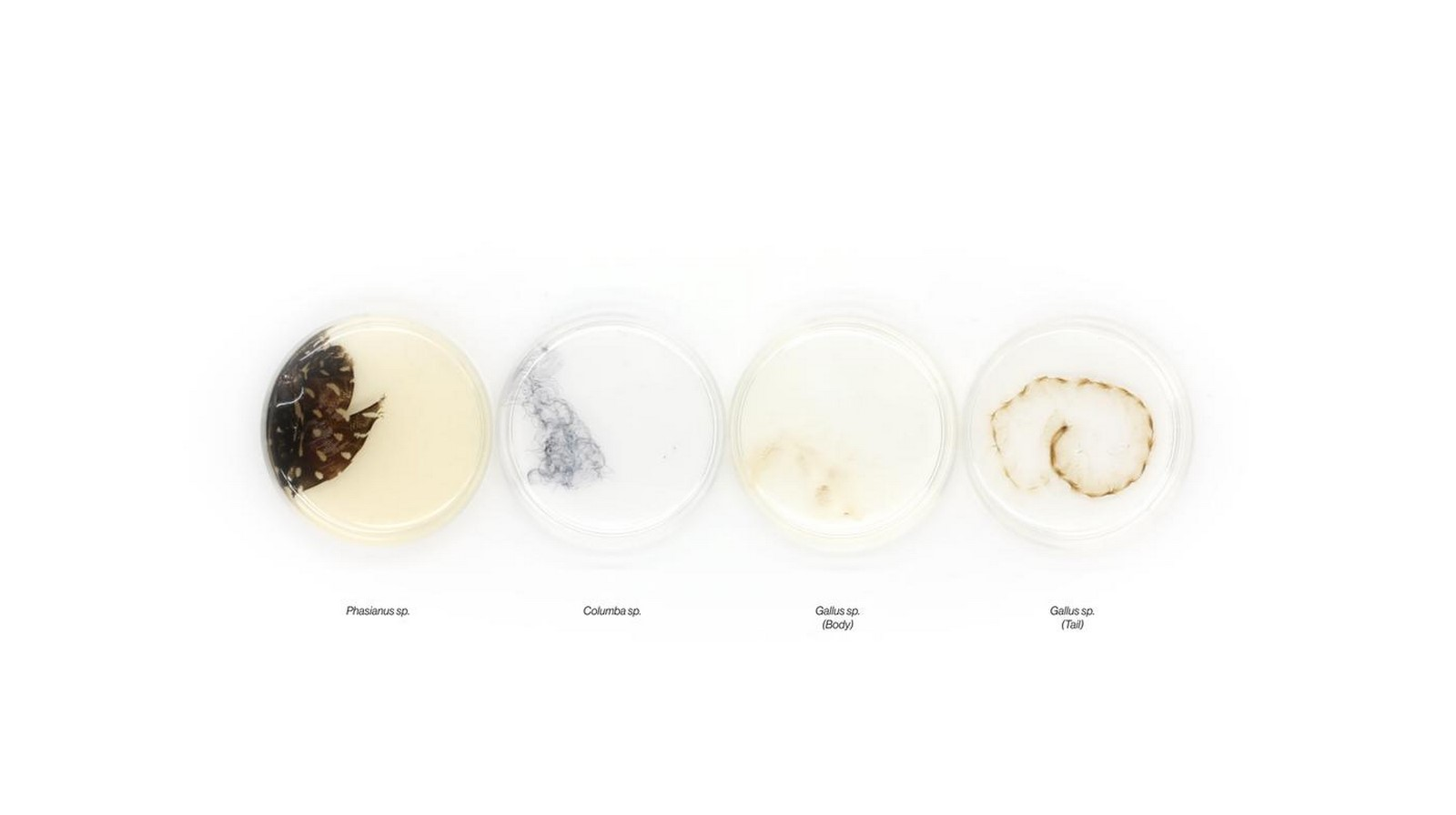 Totems by Neri Oxman: Biological and Environmental augmentation - Sheet4