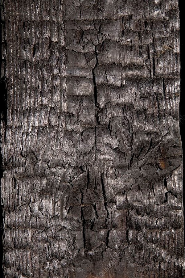 10 Things you did not know about shou sugi ban - Sheet6