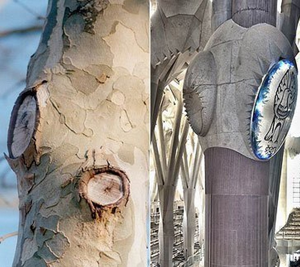 Theory in Architecture: Biomimetic architecture - Sheet4