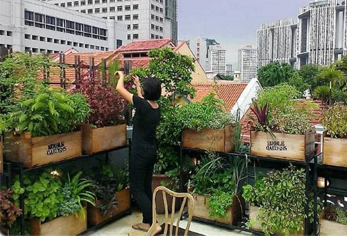 10 things to remember when designing rooftop gardens - Sheet3
