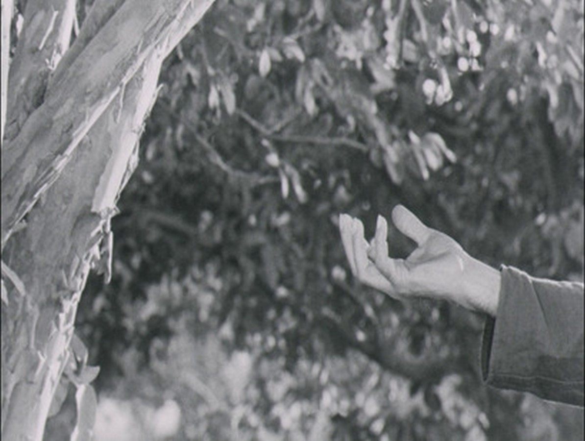 Article in Focus: Improvisation on a Scale: The Cinema of Mani Kaul - Sheet2