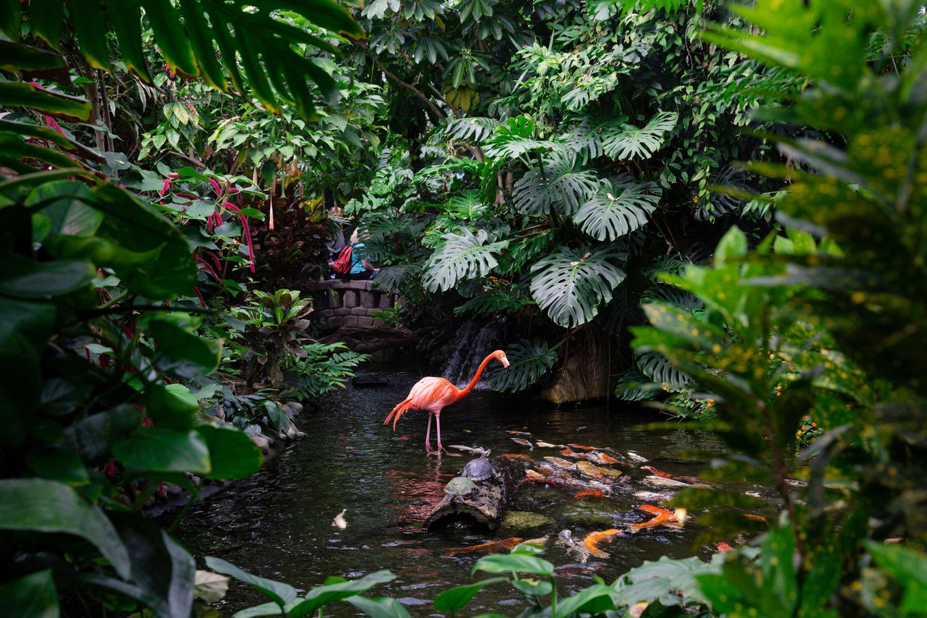 Victoria Butterfly Gardens - Sheet2