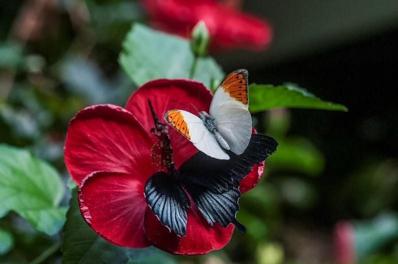 Victoria Butterfly Gardens - Sheet3
