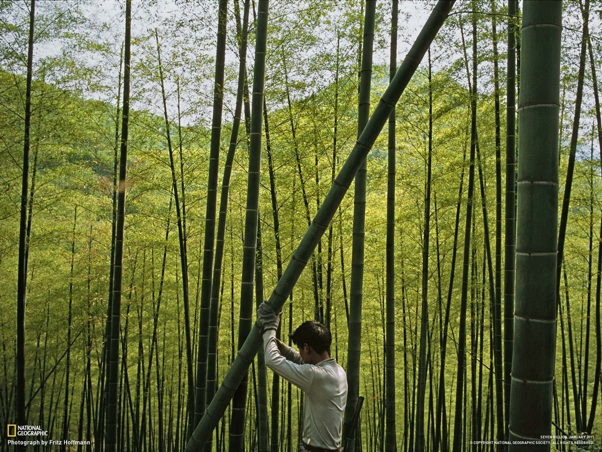 Youtube for Architects: Bamboo—the Tradition of the Future - Sheet5