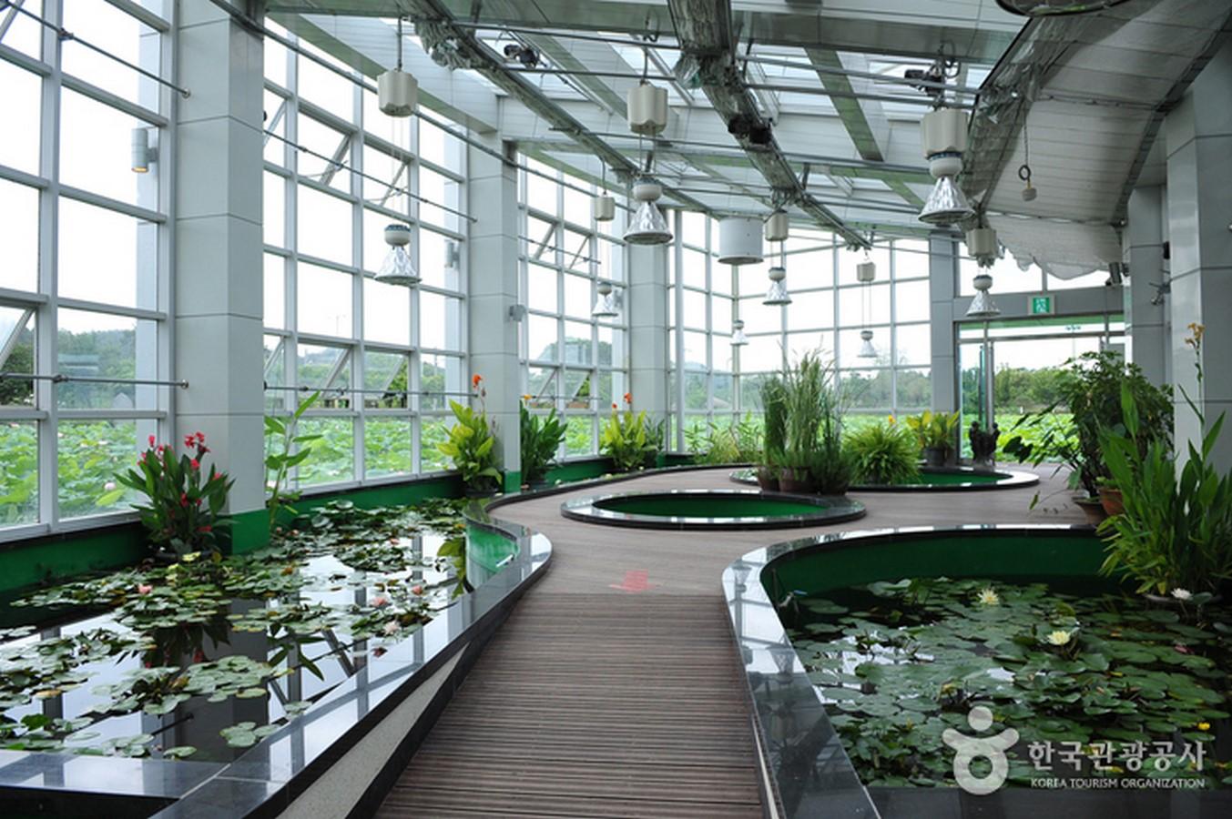 Hoesan White Lotus Pond, Jeonranamdo - Sheet1