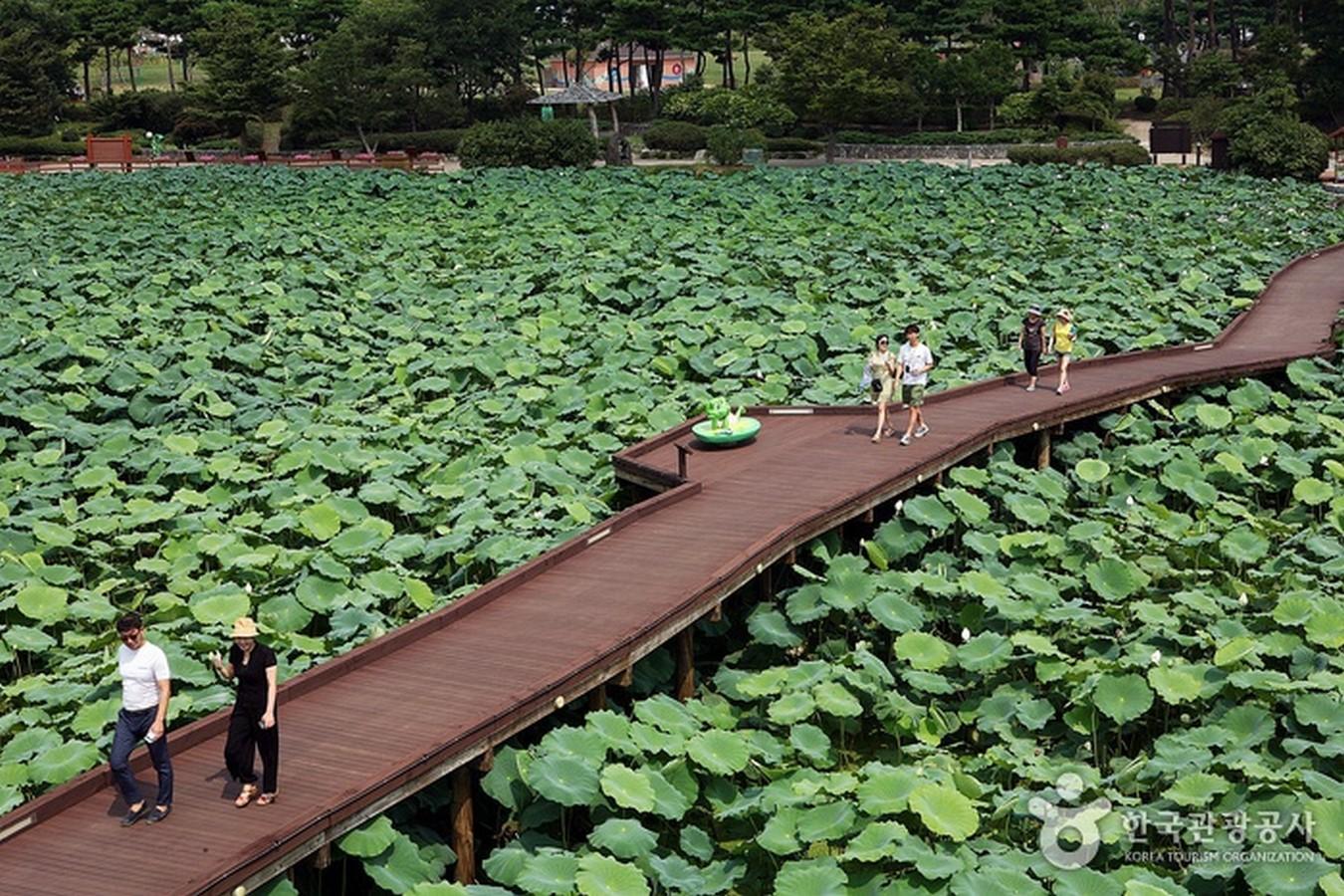 Hoesan White Lotus Pond, Jeonranamdo - Sheet2