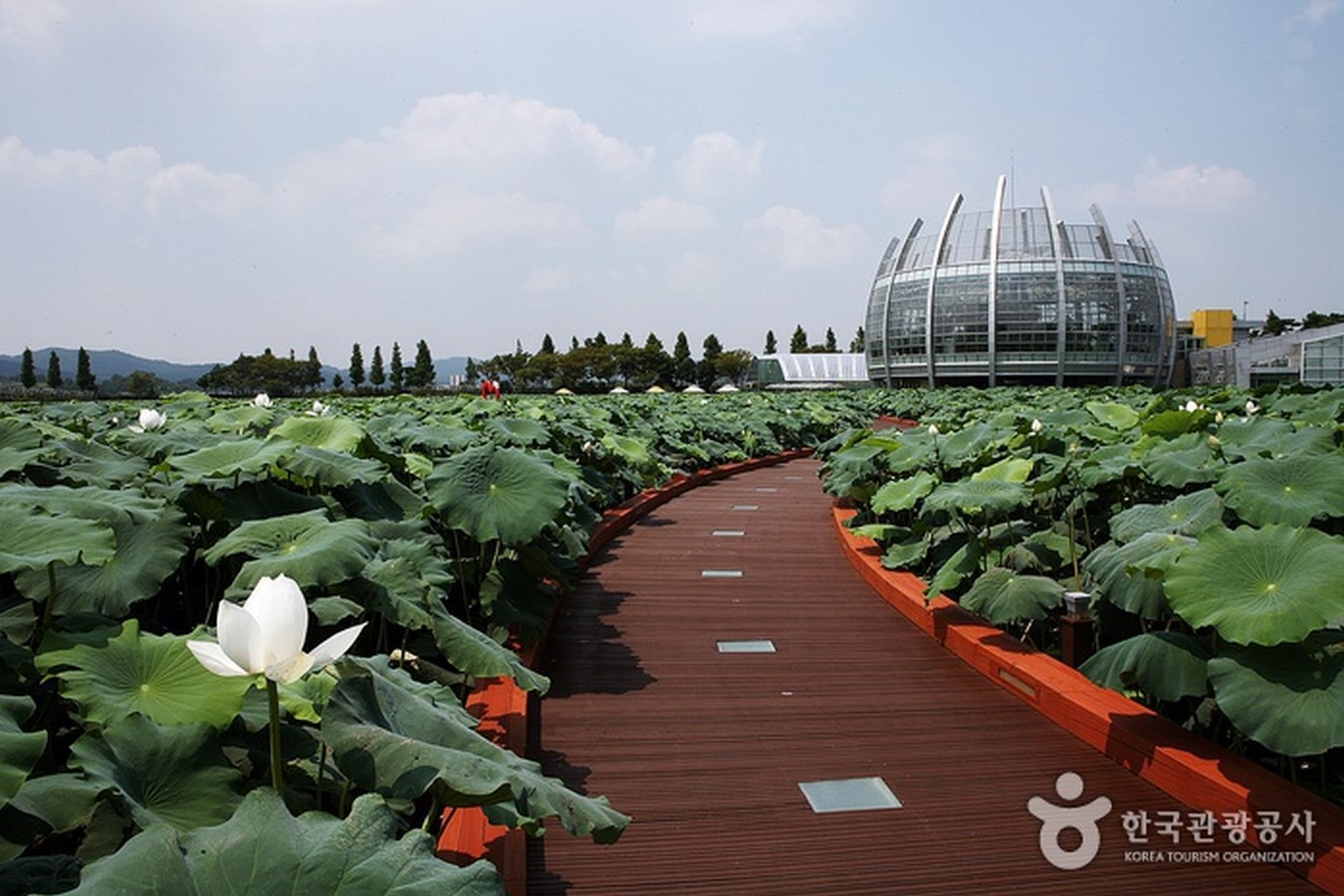 Hoesan White Lotus Pond, Jeonranamdo - Sheet3
