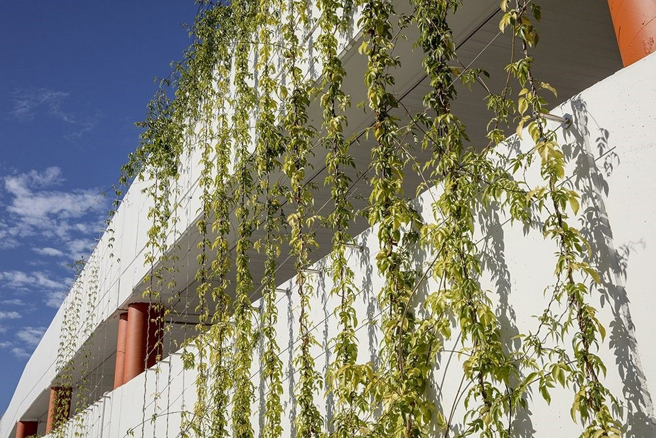 10 things you did not know about Green walls - Sheet10