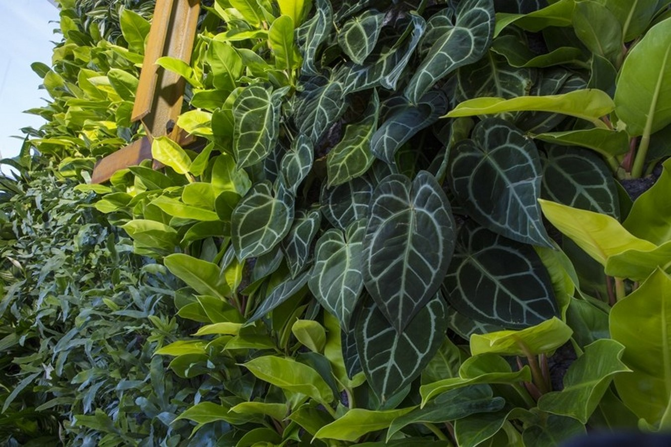 10 things you did not know about Green walls - Sheet22