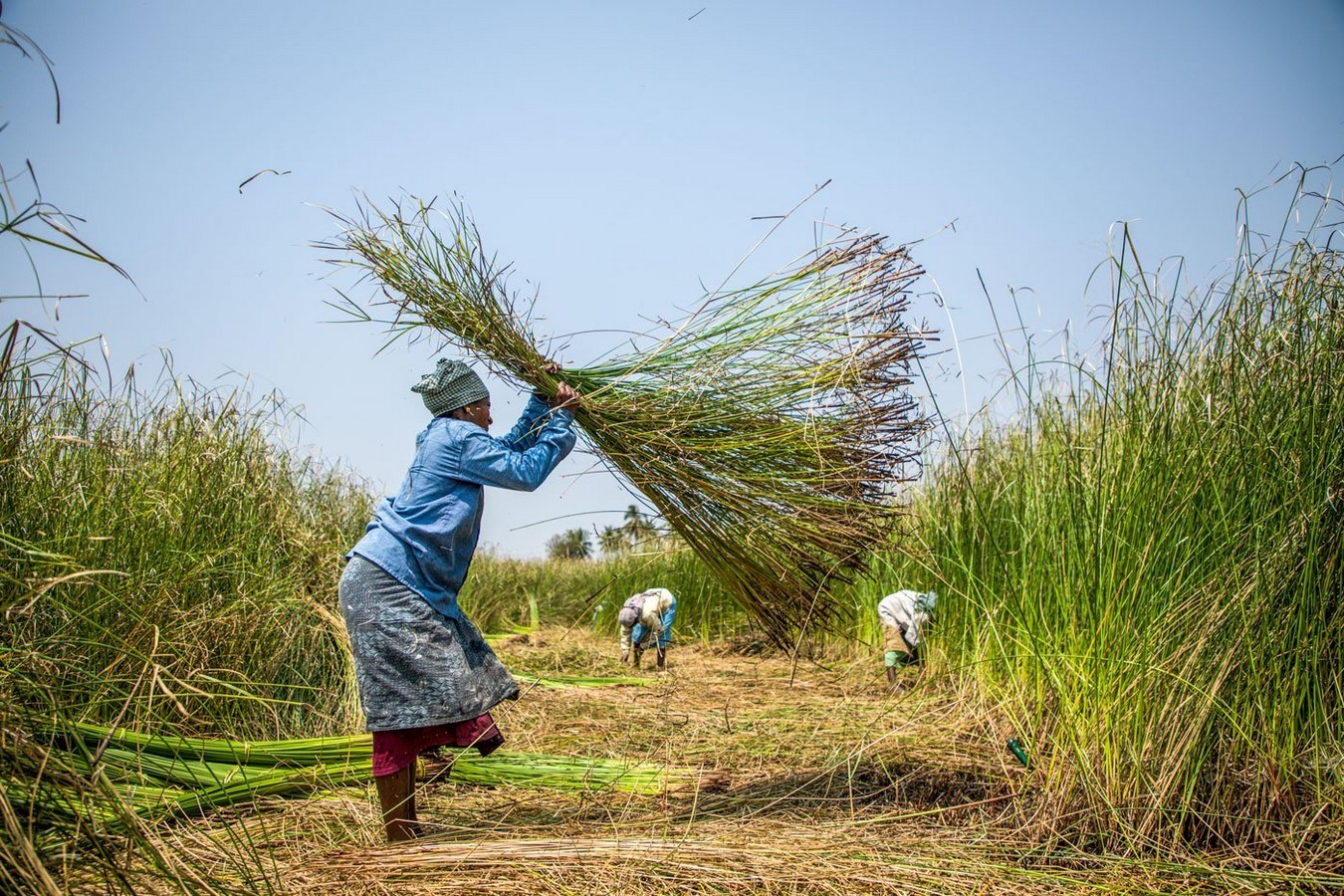 How are the rural development projects kill cottage industries - Sheet3
