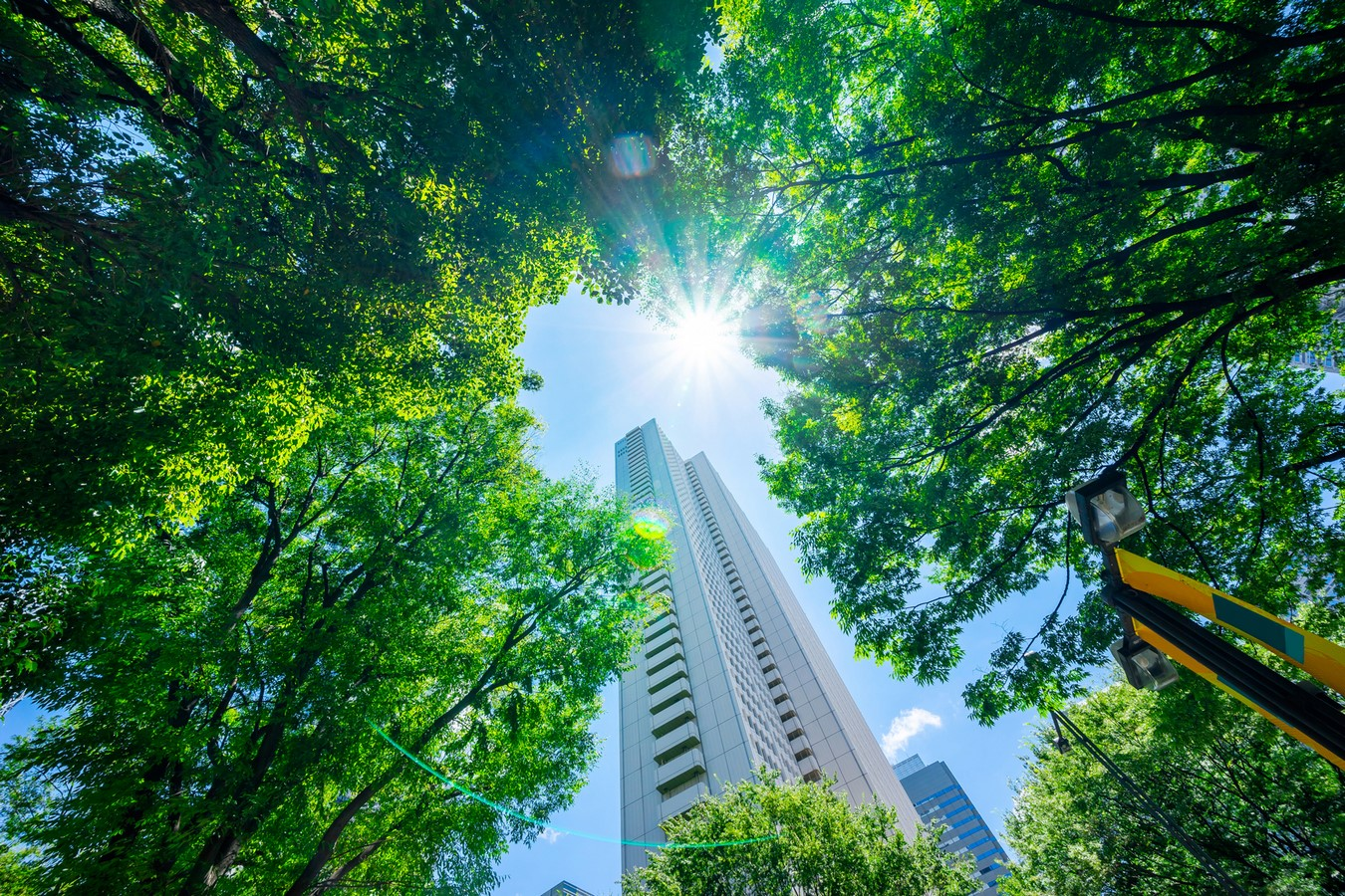 The Urban Green: Sustainable Cities - Sheet5