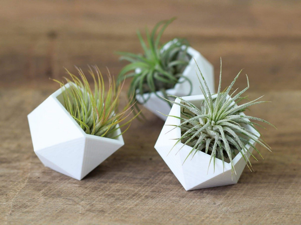 11 Plants for your workstations Sheet1
