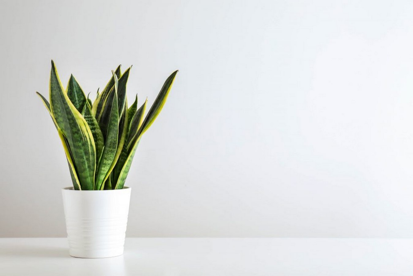 11 Plants for your workstations Sheet2