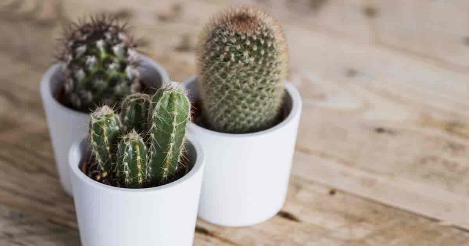 11 Plants for your workstations Sheet3