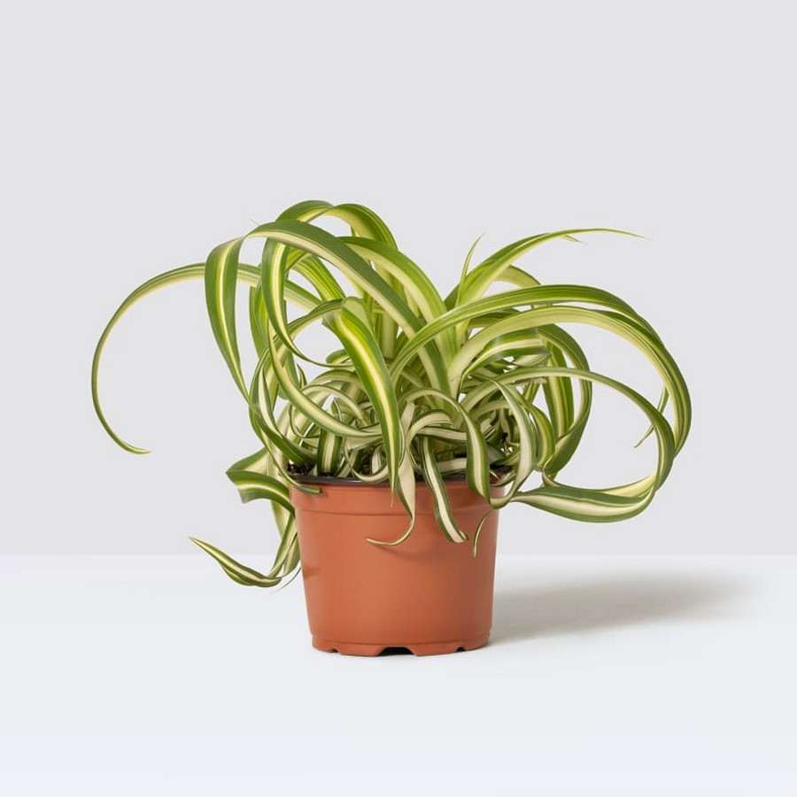 11 Plants for your workstations Sheet4