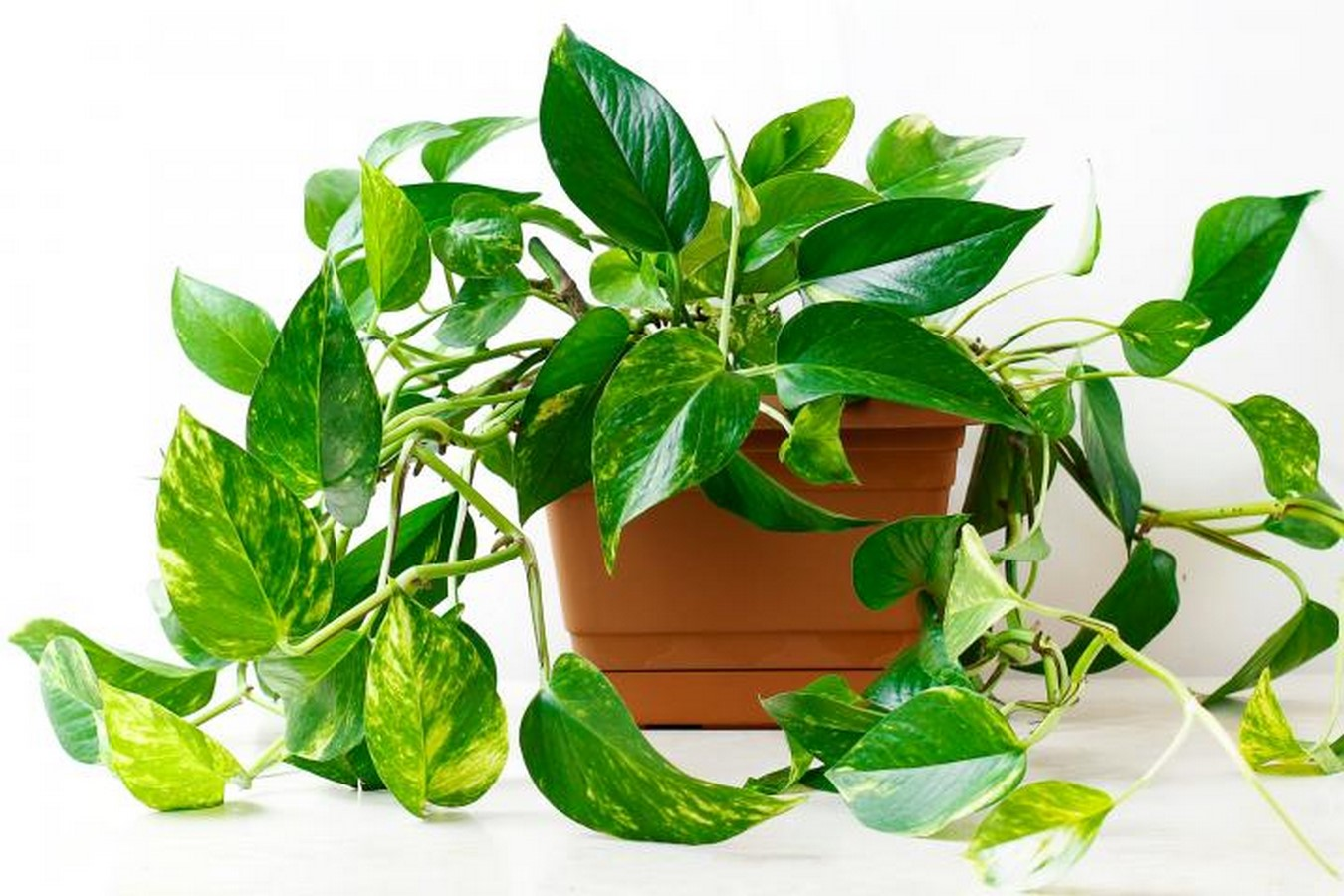 11 Plants for your workstations Sheet8
