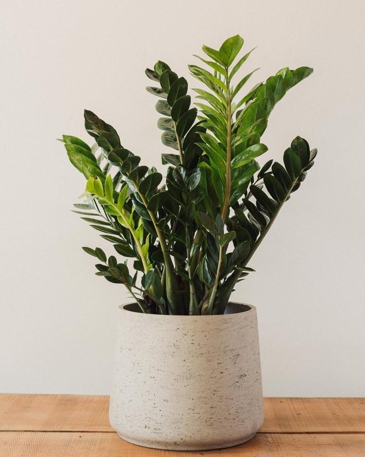 11 Plants for your workstations Sheet9