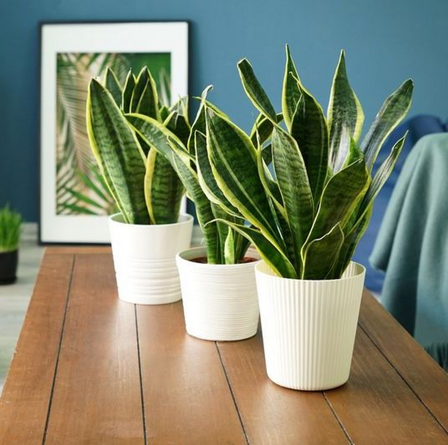 10 interior plants for your Interiors - Sheet2