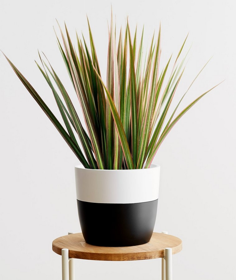 10 interior plants for your Interiors - Sheet3