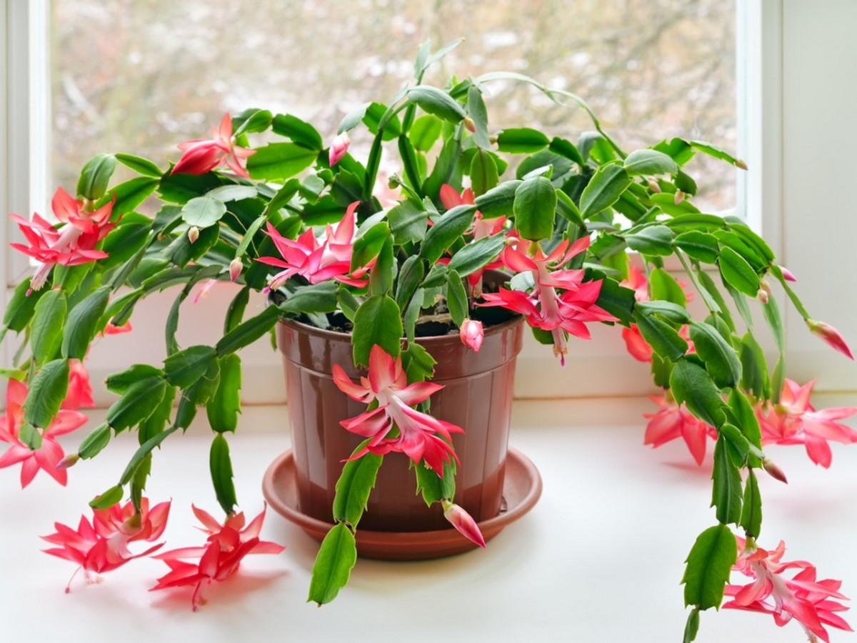 10 interior plants for your Interiors - Sheet10