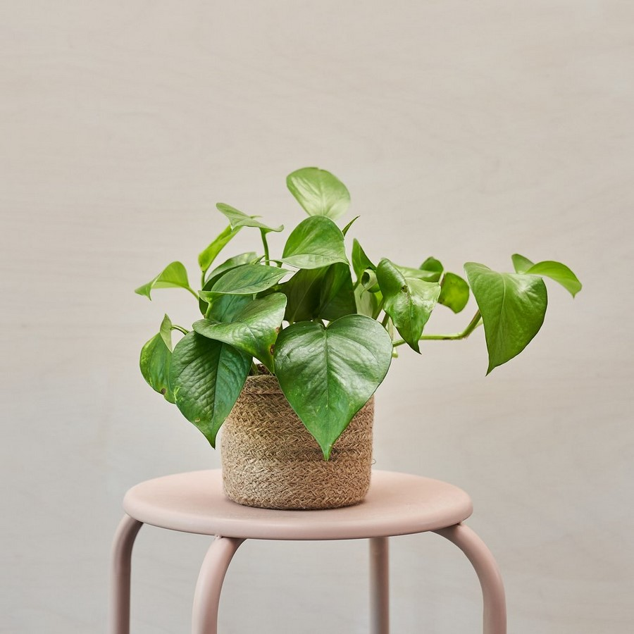 10 interior plants for your Interiors - Sheet11