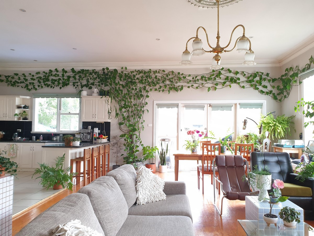 10 interior plants for your Interiors - Sheet12