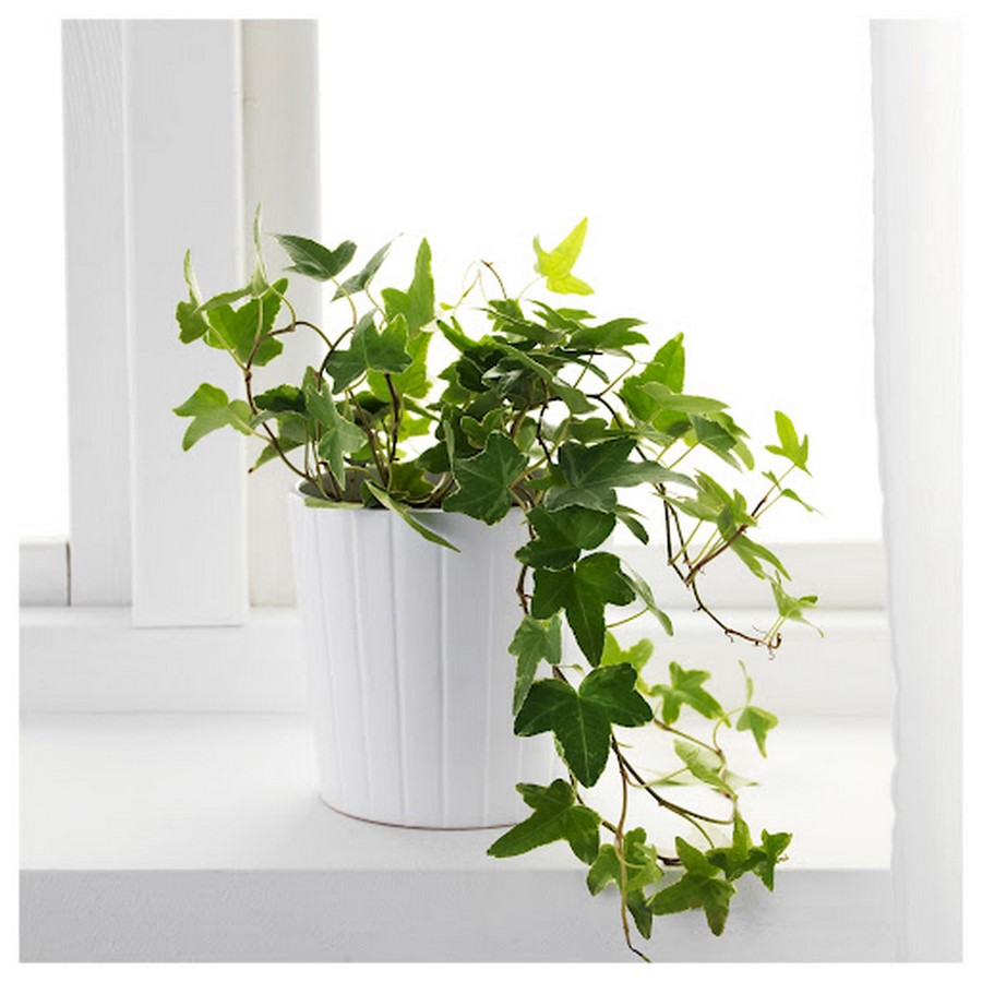10 interior plants for your Interiors - Sheet13