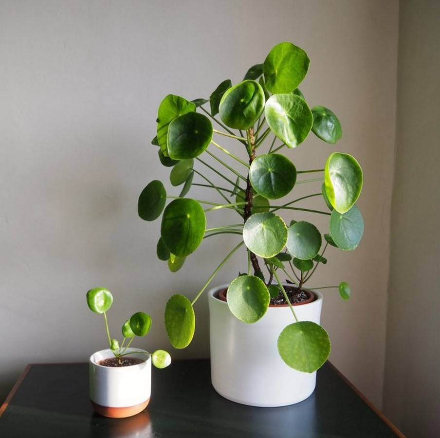 10 interior plants for your Interiors - Sheet14