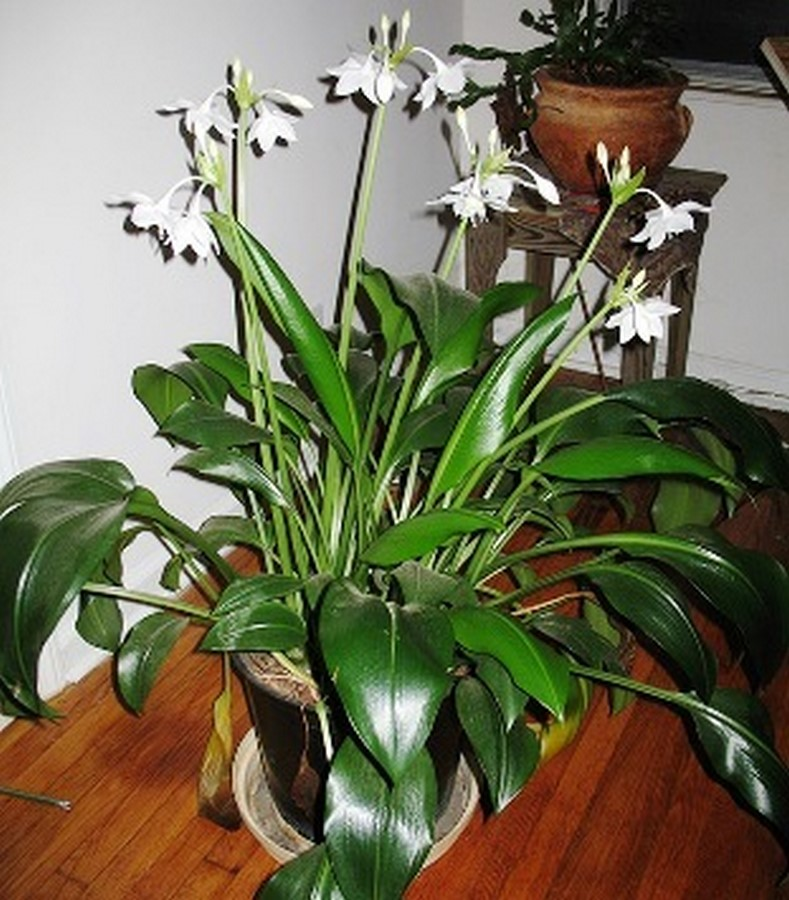 10 interior plants for your Interiors - Sheet15