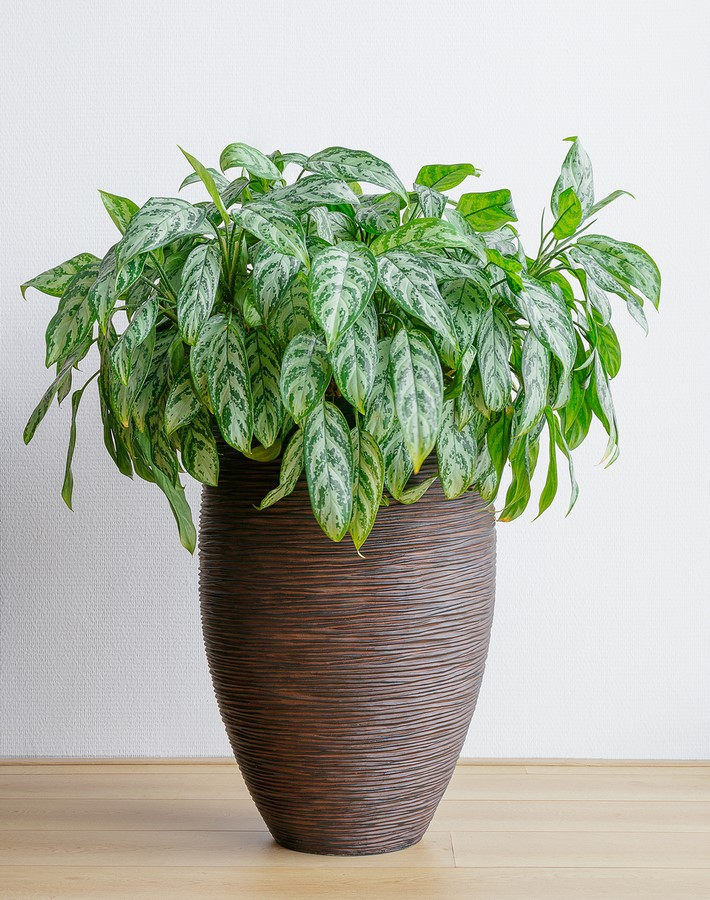 10 interior plants for your Interiors - Sheet7