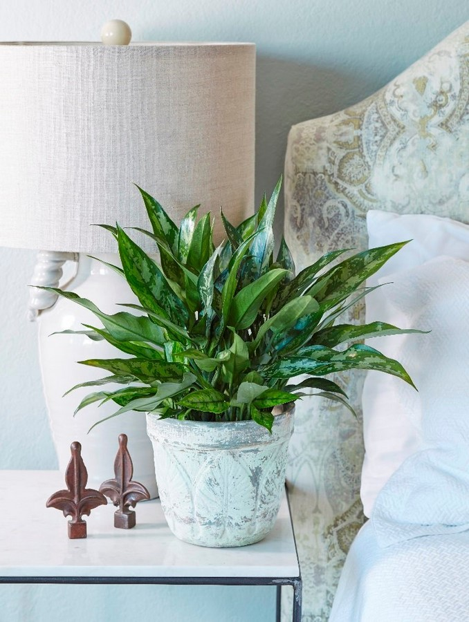 10 interior plants for your Interiors - Sheet8