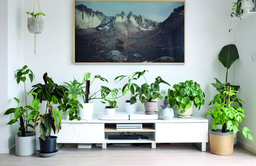 10 interior plants for your Interiors
